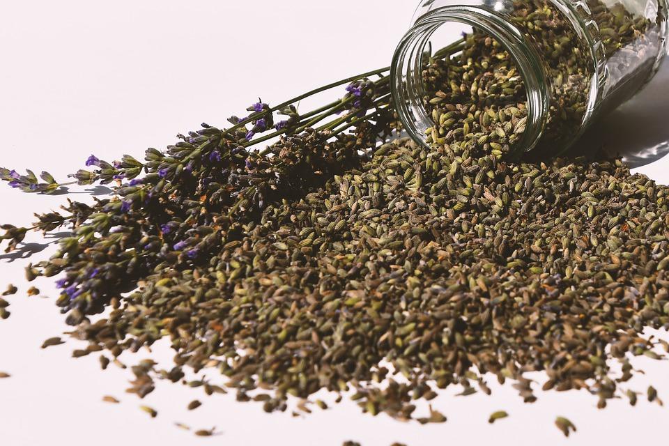 Wielange ist Saatgut haltbar?